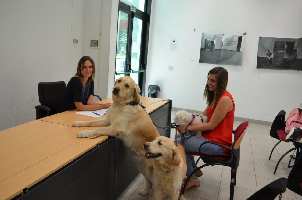Teramo Universita Apre Alla Pet Therapy In Via Sperimentale Possibile Sostenere Gli Esami Accompagnati Da Un Cane Il Fatto Quotidiano