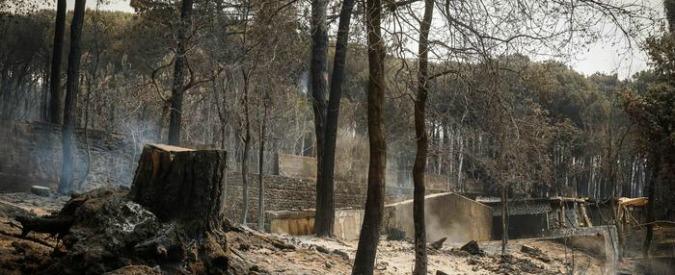 """Incendi, gatti vivi usati per appiccare i roghi sul Vesuvio? """"Il garante degli animali: """"Bufala"""". Tutto da verificare"""