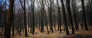Incendi, Sud in ginocchio: centinaia di roghi, 600 turisti evacuati a Metaponto. In Calabria ci sono le prime due vittime