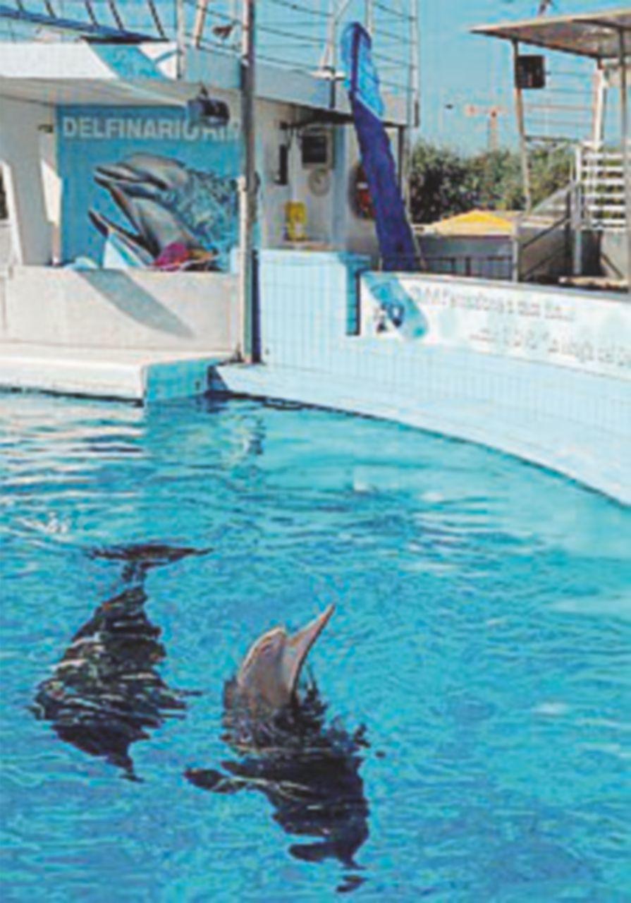 Rischia di chiudere il delfinario dove lavora Gessica Notaro