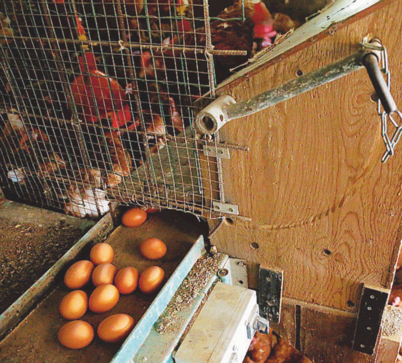 Non solo uova. Quanti pesticidi nei cavoli cinesi