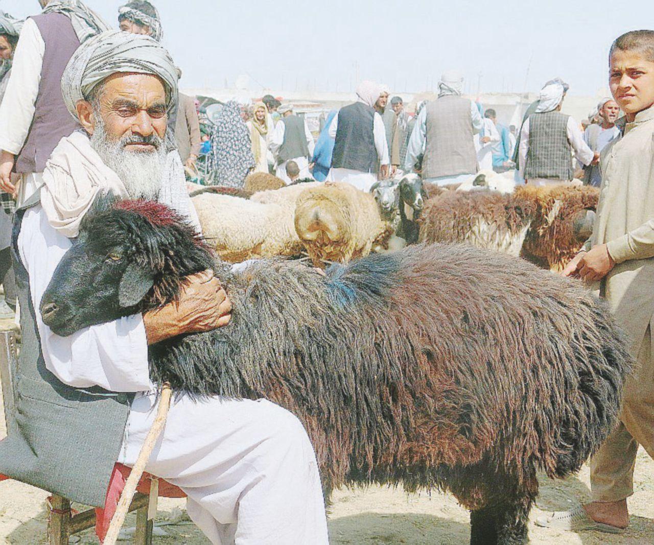 Afghanistan, 9 capre da 6 milioni di dollari e altri sprechi Usa