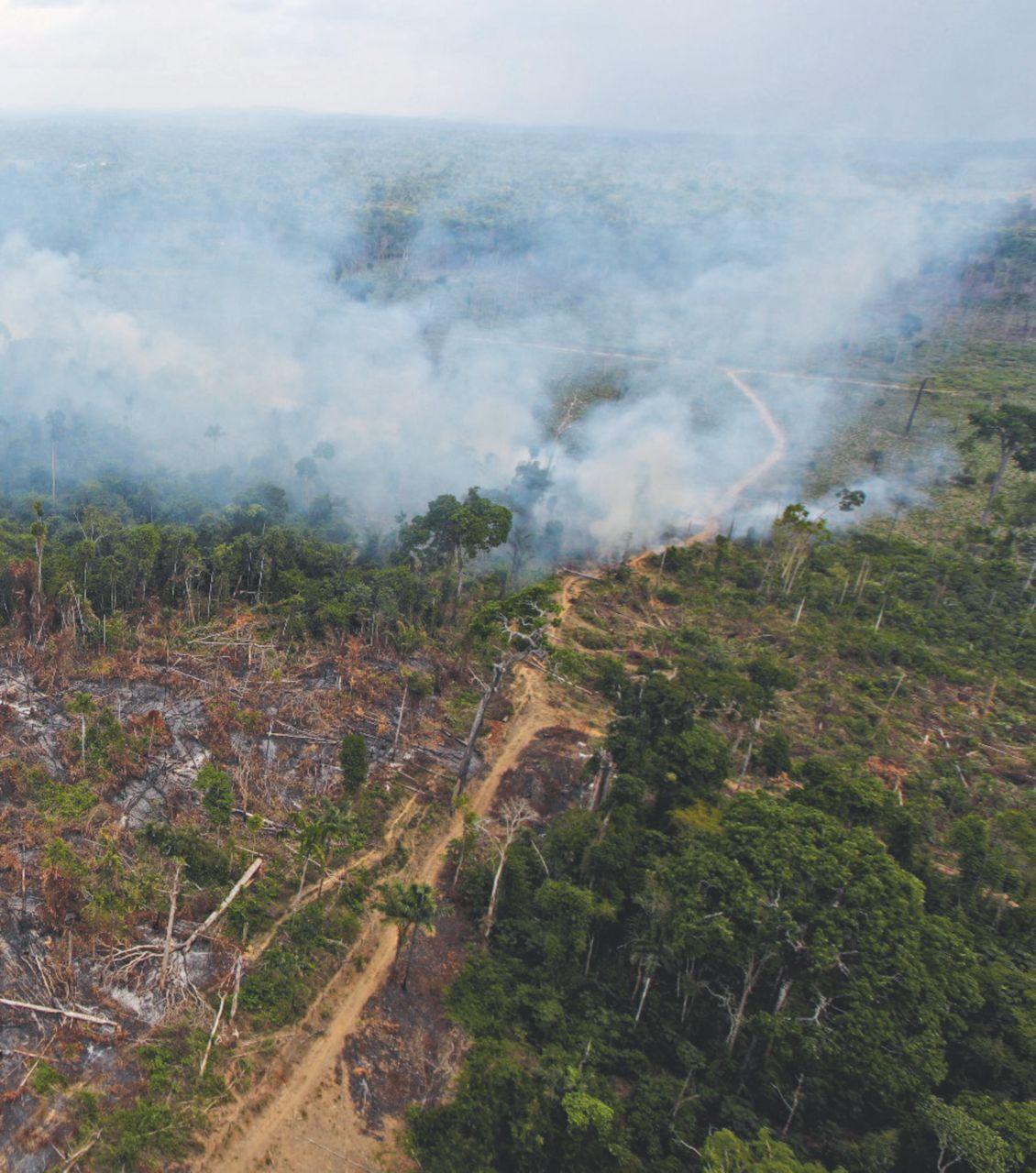 Amazzonia privata. Il dono di Temer alle multinazionali