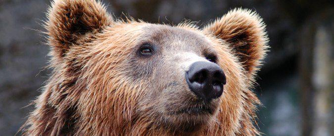 Dall'abusivismo di necessità all'abbattimento dell'orsa, un'estate da dimenticare