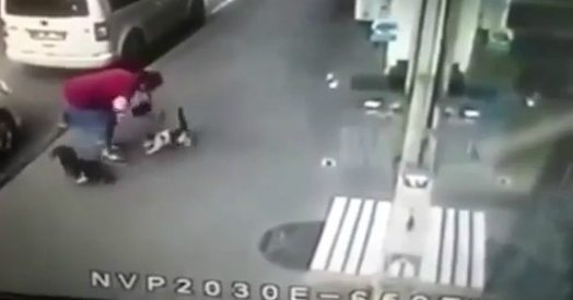 L'agguato in strada è proverbiale, litigano come cane e gatto ma il terzo… non gode