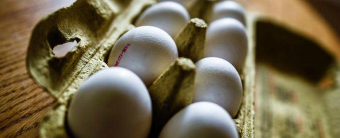 Uova contaminate con insetticida, allarme in 15 Stati. La Ue convoca ministri della salute. Sequestrati prodotti in Italia