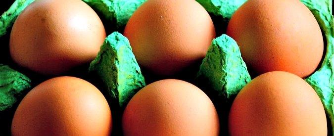 Uova al fipronil, allarmi negati e tagli ai controlli: la gestione amatoriale della crisi di Olanda e Belgio