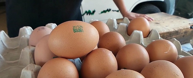 Uova, non fatevi ingannare. Ecco come sceglierle