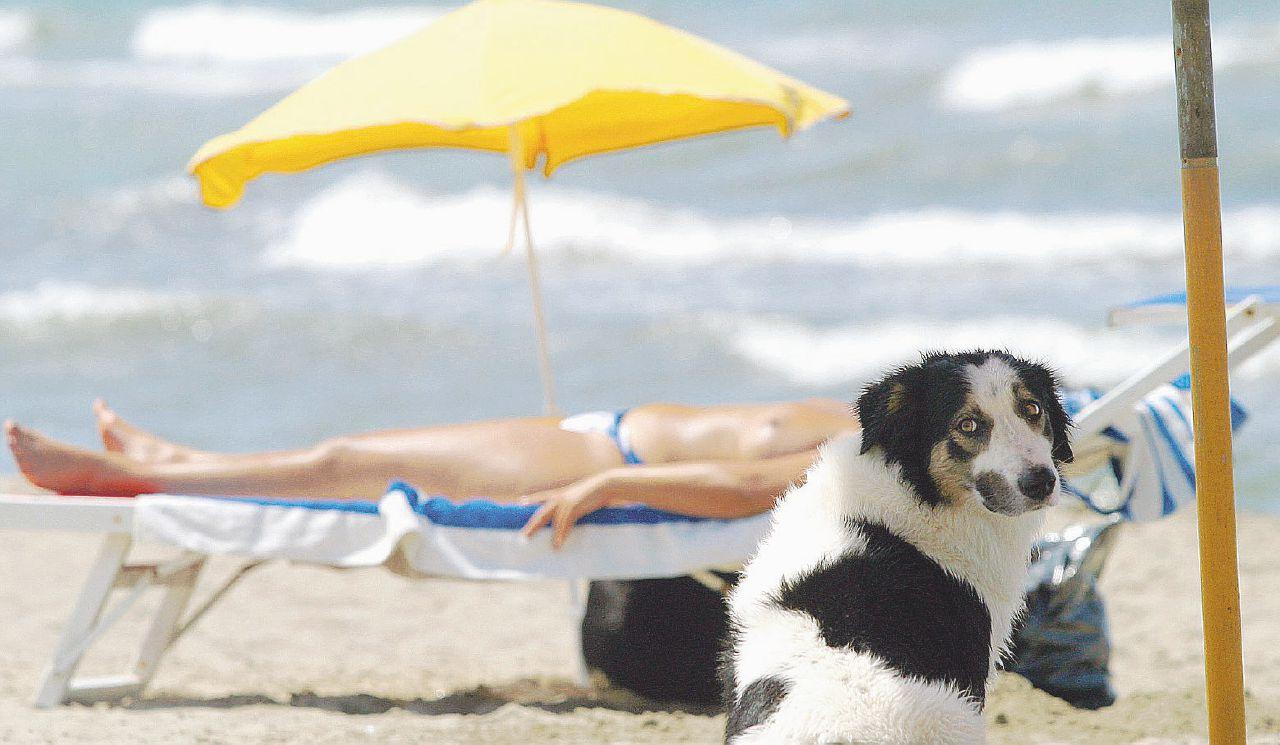 Vacanze da incubo con cani e bambini: nessuno li vuole più