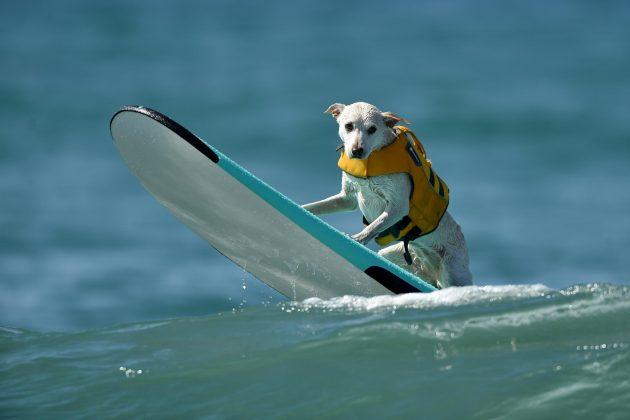 Cani surfisti, la competizione in California (FOTO)