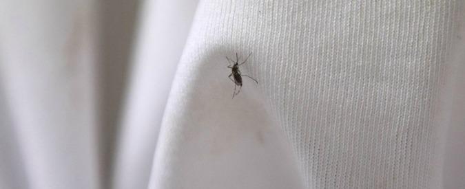 """Chikungunya, ci sono 20 nuovi casi nel Lazio. Centro europeo Malattie: """"C'è alta probabilità di nuove infezioni"""""""