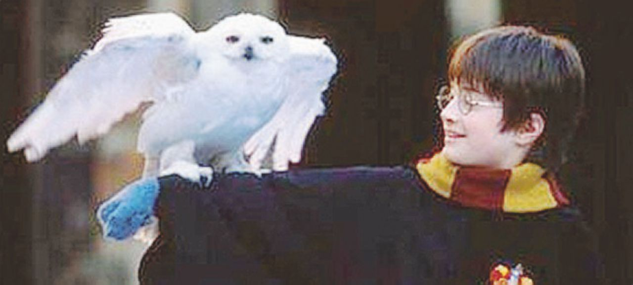 L'ultima magia di Potter in Oriente: far estinguere la civetta delle nevi