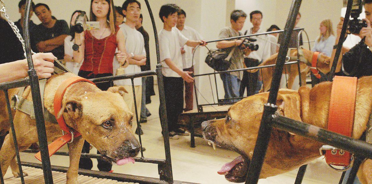 Guggenheim: arte sì, purché non sia da cani