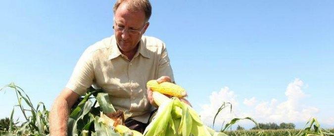 """Ogm, la Corte europea contro l'Italia: """"Non può vietare le coltivazioni geneticamente modificate"""""""