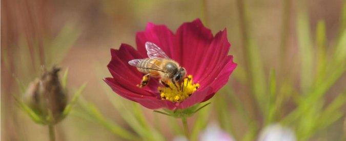 Caffè, piantagioni a rischio a causa del clima ma le api salveranno una delle bevande più bevute e benefiche