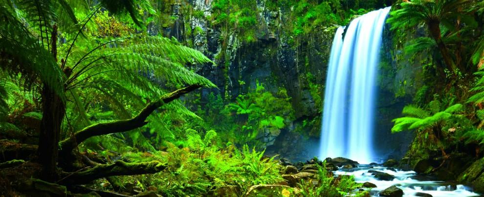 Foreste, tutelarle significa eliminare l'anidride carbonica di 1,5 miliardi di auto