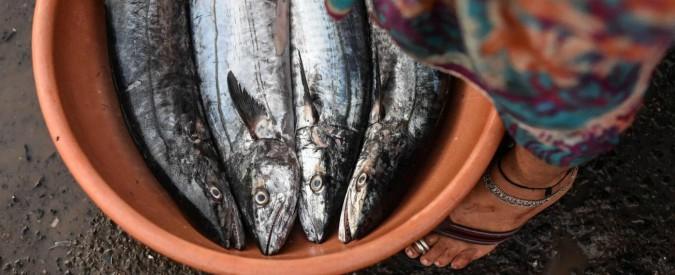 """Alimentazione, """"diossina, inquinamento e specie sfruttate: ecco perché mangiare pesce non conviene a nessuno"""""""
