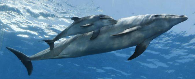 Delfini, usano i nomi individuali per identificare amici e rivali