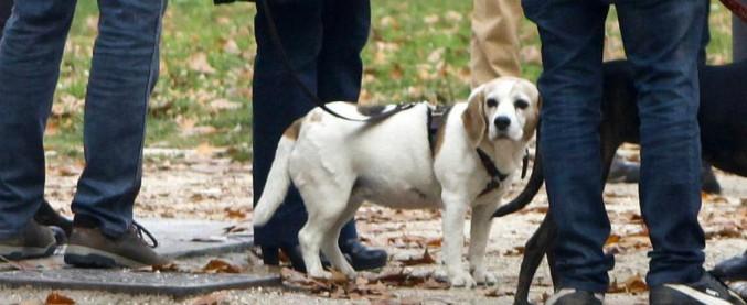 Milano, donna sgozzata nel parco di Villa Litta mentre passeggiava col cane. Ipotesi rapina, ma rimangono aperte tutte le piste