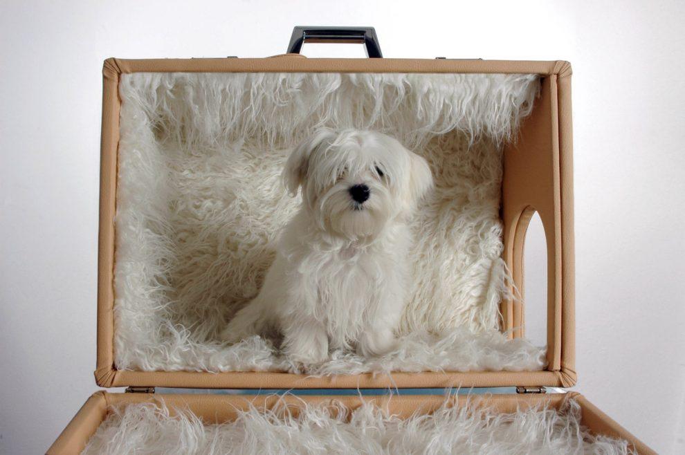 Animal Design Trecentomila Euro Per Una Cuccia Tutto Per I Cani A