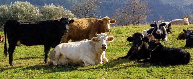 Allevamenti, la nostra battaglia per portare le vacche di Parmigiano e Grana Padano al pascolo