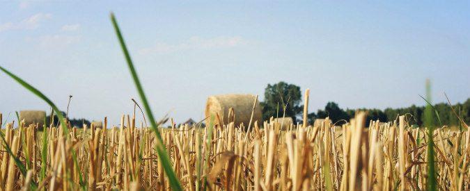 Agricoltura, facciamo il punto sulla situazione in Italia