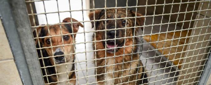 Nardò: se adotti un cane, il Comune salentino ti rimborsa con 500 euro
