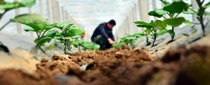 Agricoltura, terreni dello Stato in vendita per agevolare gli under 40: all'asta 8mila ettari