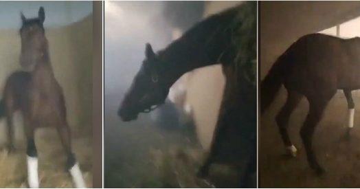 California, arrivano le fiamme. Lo stalliere eroe sfida l'incendio per liberare i cavalli