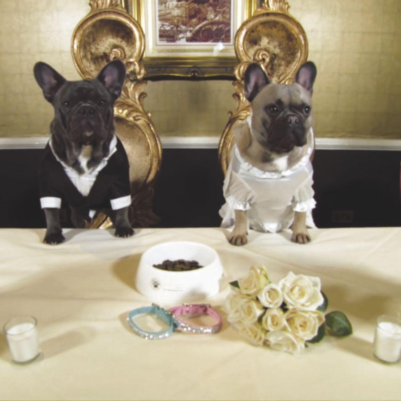 """""""Ora sono un (vero) cane sposato e non posso più fare il play boy"""""""