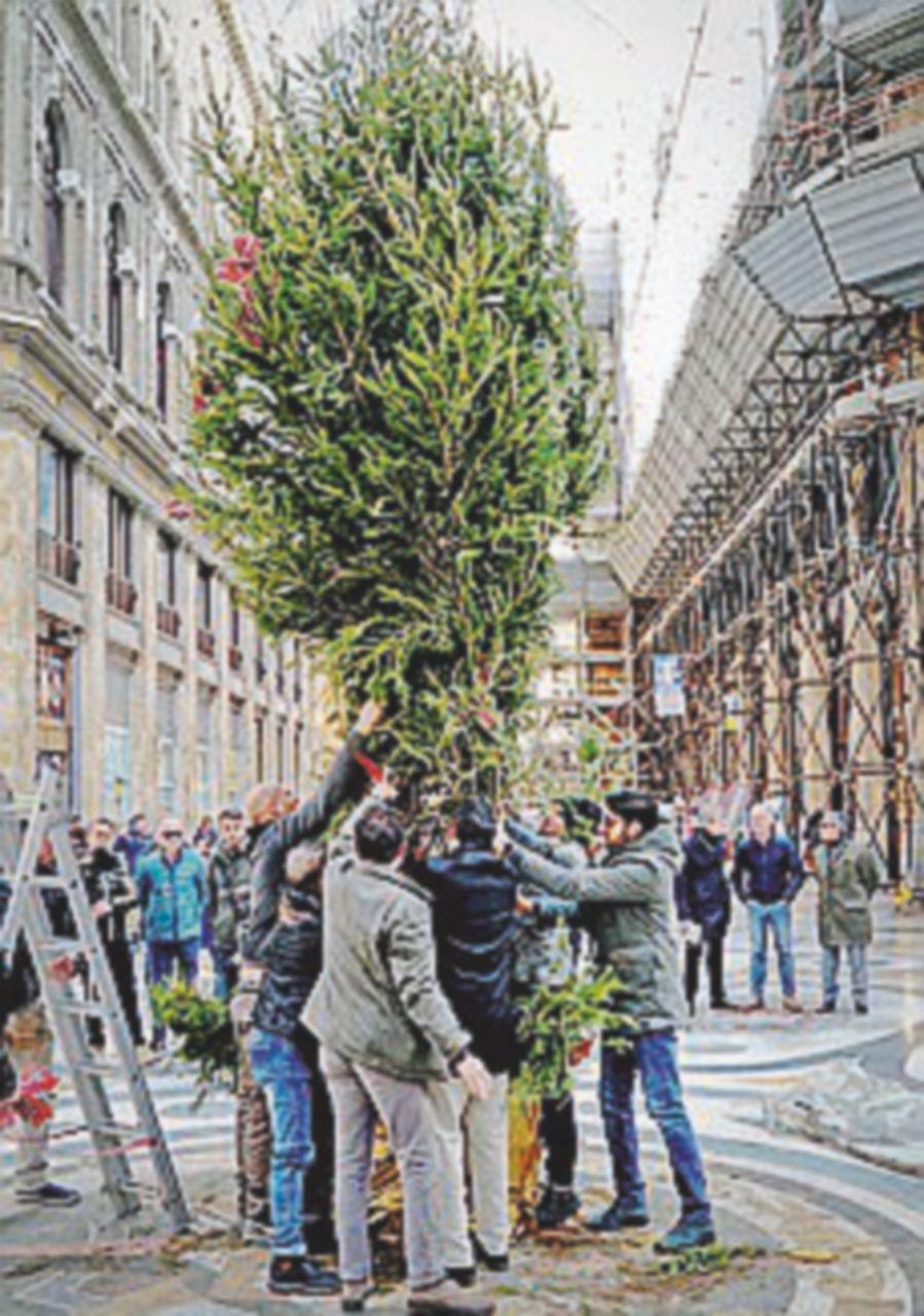 Napoli, il ritorno dell'albero rubato in Galleria Umberto