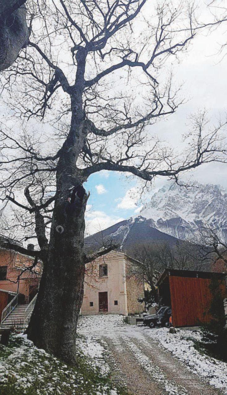 La quercia resta pericolante perché la Forestale non c'è più e tocca al ministero abbatterla