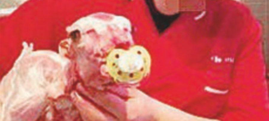 Selfie con l'agnello morto, la rivolta animalista sui social