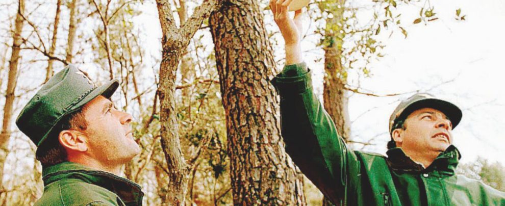 Abolire i Forestali non fa risparmiare: lo dice il governo