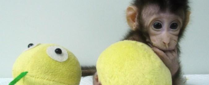 Negozi senza cassa, home banking e scimmie clonate. Dove finiscono le persone?