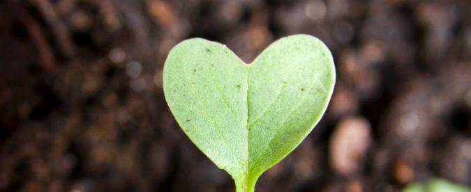 San Valentino, i consigli di Greenpeace per il sesso ecologico