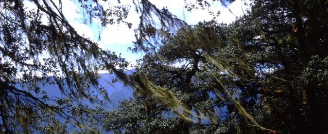 Decreto foreste, il presidente Mattarella non firmi l'ennesima legge ai danni dell'ambiente