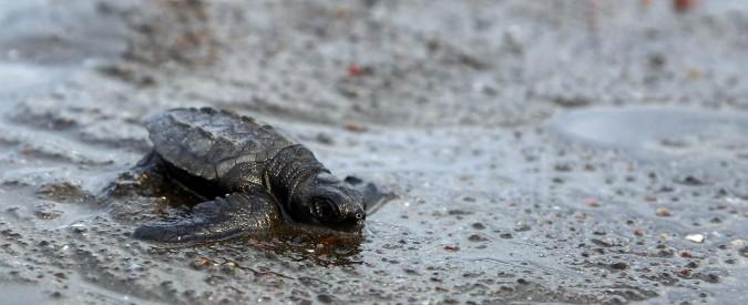 """Clima, l'allarme del Wwf: """"A rischio la metà delle specie animali nel Mediterraneo e in Amazzonia"""""""