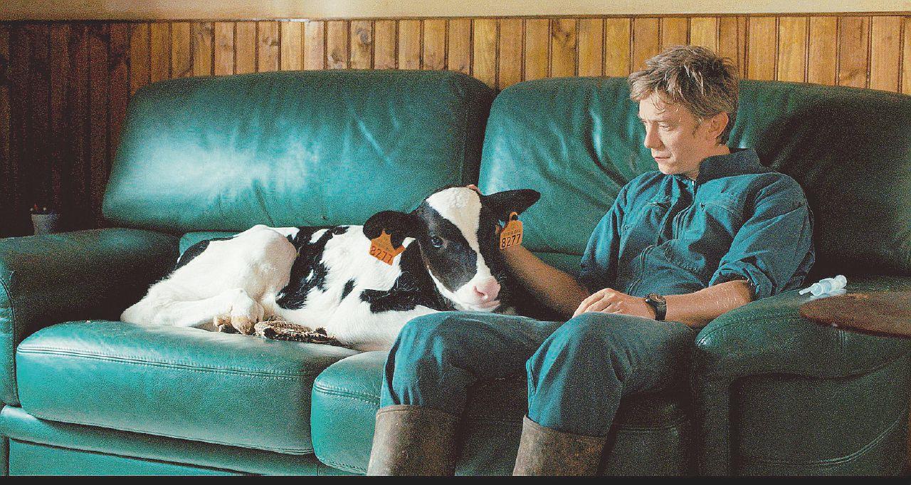 Il contadino pazzo per le mucche (anche se pazze)