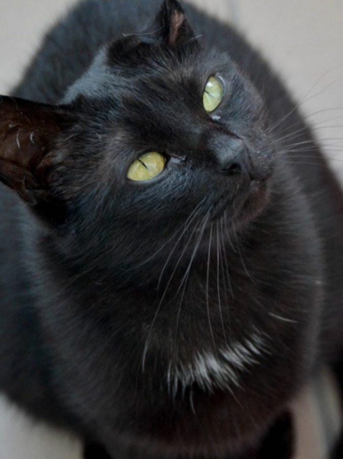 Uccide il gatto in lavatrice e ne gioisce: petizione di oltre 300mila firme per punirla