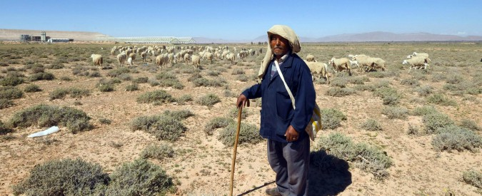 """Cooperazione, i pastori sardi insegnano il mestiere in Tunisia. """"Così si creano condizioni per far tornare chi è emigrato"""""""