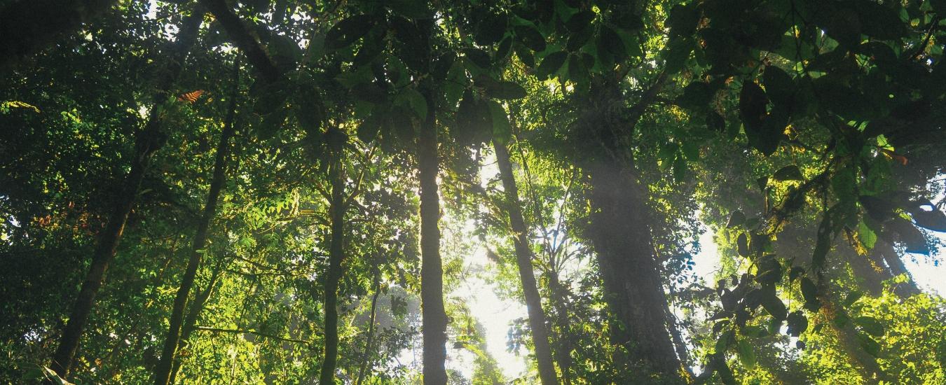 Foreste e biomasse, gli alberi andrebbero piantati non certo sradicati