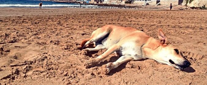 """Marocco, massacro di cani randagi per la visita degli ispettori Fifa in vista dei Mondiali 2026. """"Uccisi a fucilate di notte"""""""