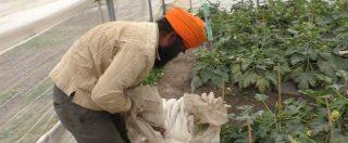 """I lavoratori sikh nell'Agro Pontino incastrati tra caporalato e agromafie: """"Chi tocca il sistema è a rischio"""""""
