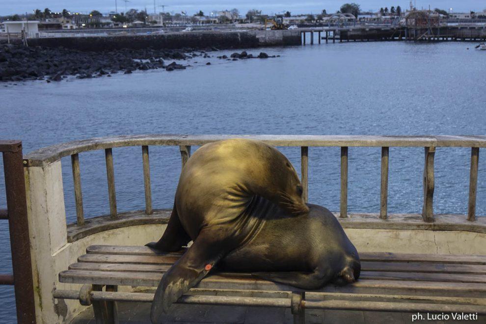 Una foca su una panchina del porto
