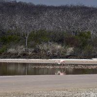 Un fenicottero rosa una laguna