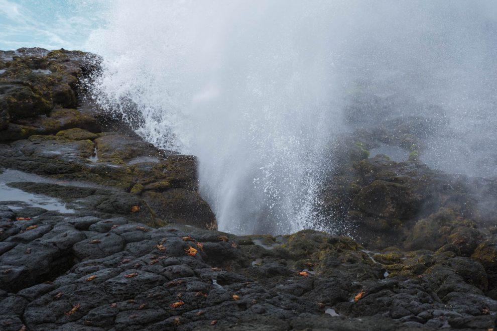 Granchi sulle rocce viulcaniche