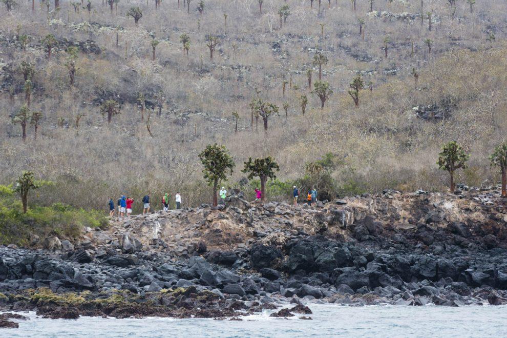 La vegetazione dell'isola di Santa Fe
