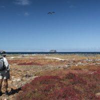 Isola North Seymour island