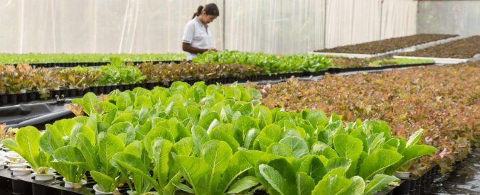 Agricoltura bio, in gioco c'è il nostro futuro. Ma per conquistare il consumatore serve trasparenza